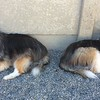 JJ and JoJo had a relaxing day out in the daycare yard!  Lots of little naps!