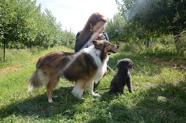Brooke & Dogs