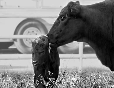 May 14, 2013 Moo & Moo Baby