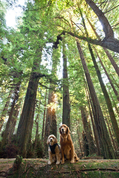 Bodhi Indy Redwoods - 6933_Edit