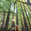 Bodhi Indy Redwoods - 6933_Edit