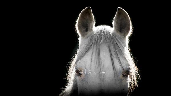 Pet Portraiture ~ Capturing the Ones that Capture You
