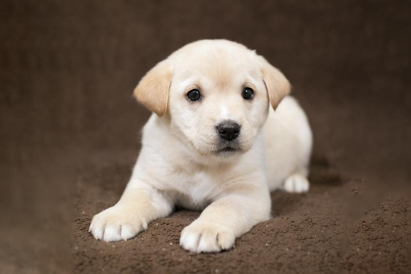 SHS - PuppyWhoKissesA40222299-2