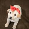 SHS - PuppyWhoKissesA40222299-6