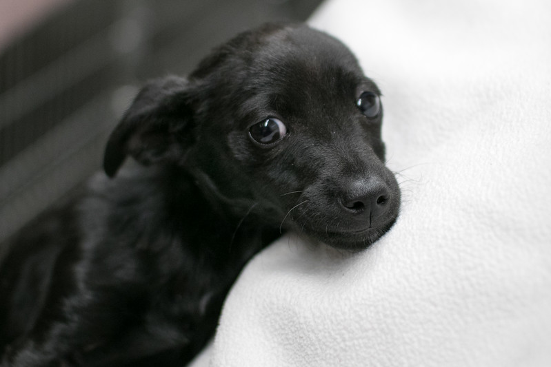SHS - Shadow-2