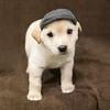 SHS - PuppyWhoKissesA40222299-8