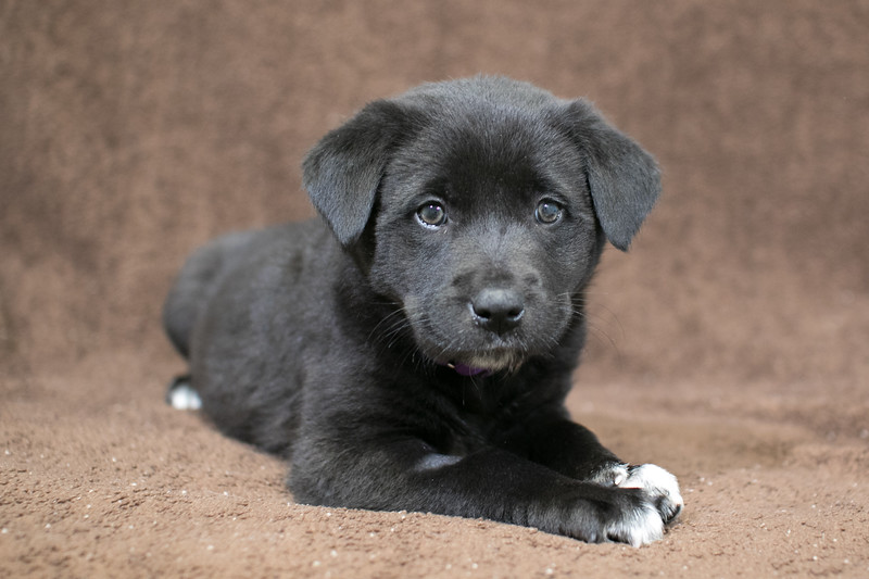 SHS - PuppyWhoExploresA40222318-1