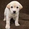 SHS - PuppyWhoKissesA40222299-3