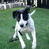SHS- Spotty Dog-1