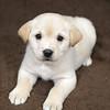 SHS - PuppyWhoKissesA40222299-1