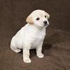 SHS - PuppyWhoKissesA40222299-7