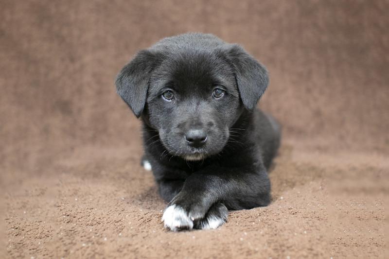 SHS - PuppyWhoExploresA40222318-2
