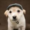 SHS - PuppyWhoKissesA40222299-9