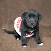 SHS - PuppyWhoExploresA40222318-3