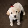 SHS - PuppyWhoKissesA40222299-5