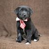 SHS - PuppyWhoExploresA40222318-6