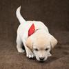 SHS - PuppyWhoKissesA40222299-4