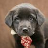 SHS - PuppyWhoExploresA40222318-4