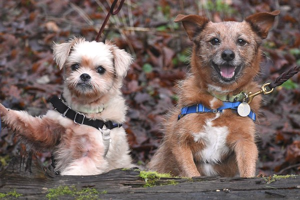 Rusty A43503361 and Sophie A43503358