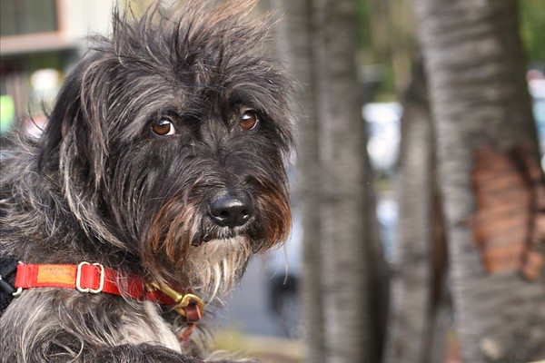 Maple A42233653