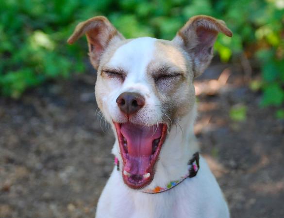 Tilda yawning