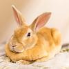 4_Thumper_A40395927