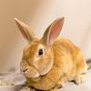 3_Thumper_A40395927
