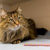 2_Kitters_A43565145