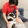 Print(L)_SHS DogMassage_MassageTherapy-8173