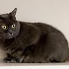 4_Kitty_A39544936