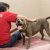 Print(L)_SHS DogMassage_MassageTherapy-8018