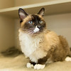 2_Kitty Girl_A40571885