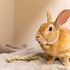 2_Thumper_A40395927