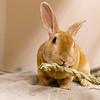 1_Thumper_A40395927