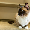 4_Kitty Girl_A40571885