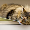 6_Kitters_A43565145