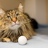 5_Kitters_A43565145