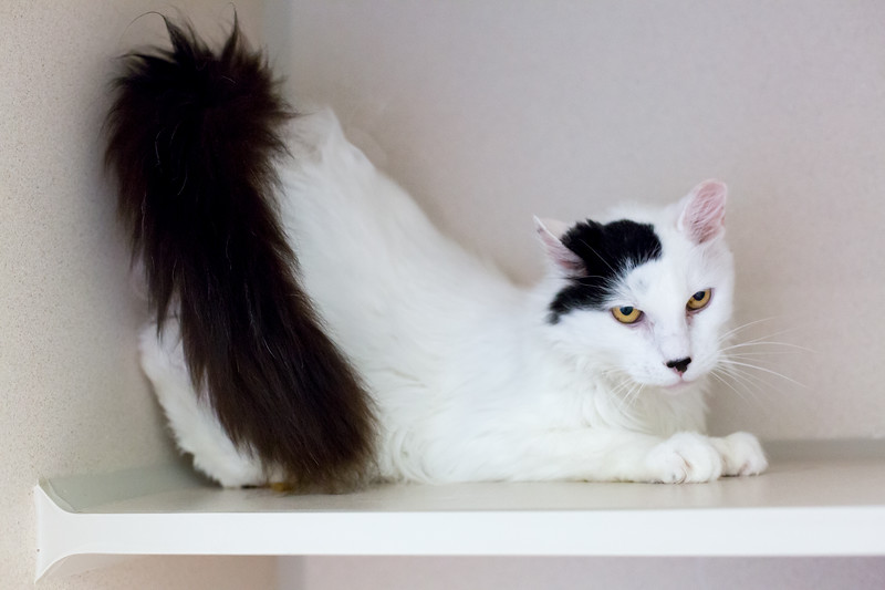 2_Kitty Cat_A39182892