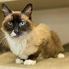 3_Kitty Girl_A40571885