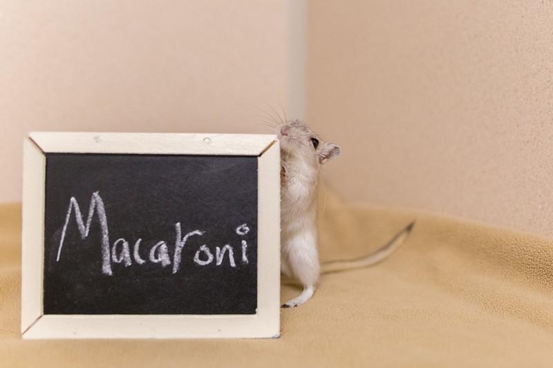 4_Macaroni_A41274980