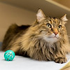 4_Kitters_A43565145