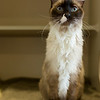 5_Kitty Girl_A40571885