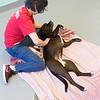 Print(L)_SHS DogMassage_MassageTherapy-7961