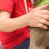 Print(L)_SHS DogMassage_MassageTherapy-8054