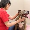Print(L)_SHS DogMassage_MassageTherapy-8045