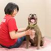 Print(L)_SHS DogMassage_MassageTherapy-8027