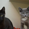 Jet & Smokey 2mo siblings - hmm...