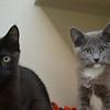 Jet & Smokey 2mo siblings - hmm...