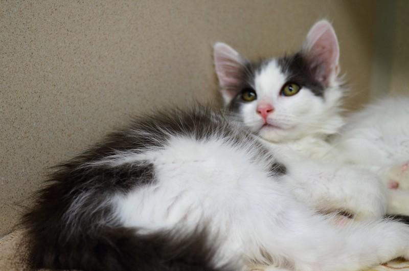 Anchovy kitten w Tuna!