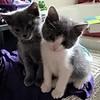 Maja and Michi - we're cute huh?